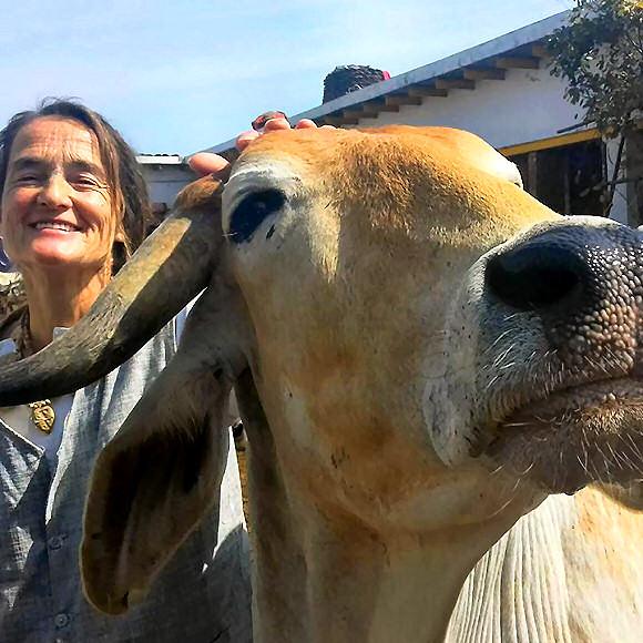 Radha Surabhi Goshala – A shelter for sick, injured and handicapped cows by Sudevi Mata